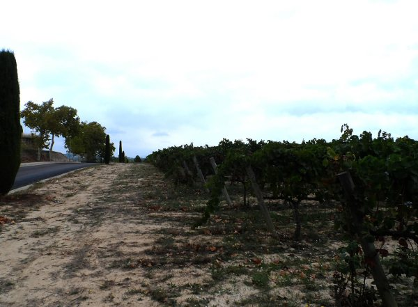 Wineyards in Spain
